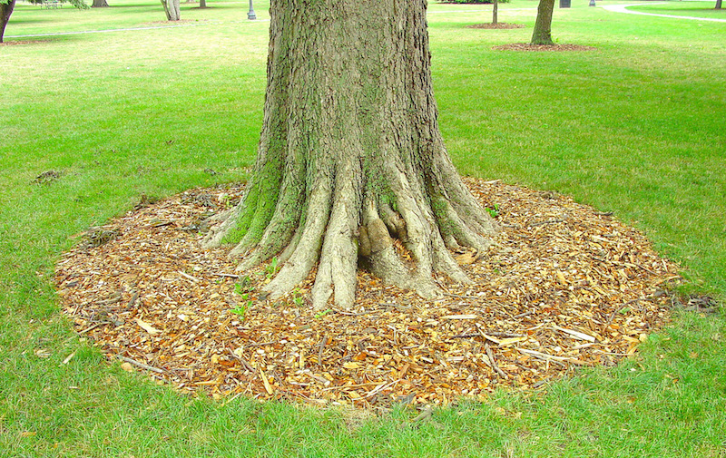 Root Crown Inspection Wichita KS Wichita Tree 2250 N. Rock Rd Ste 118-268C Wichita, KS 67226 https://plus.google.com/b/112793476550800713698/about